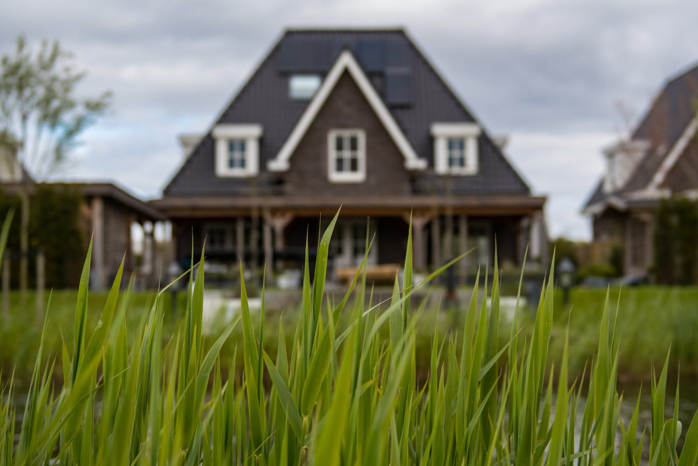 Close up of green grass with home in the background