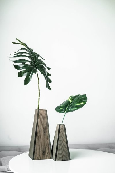 Large house plant in vase